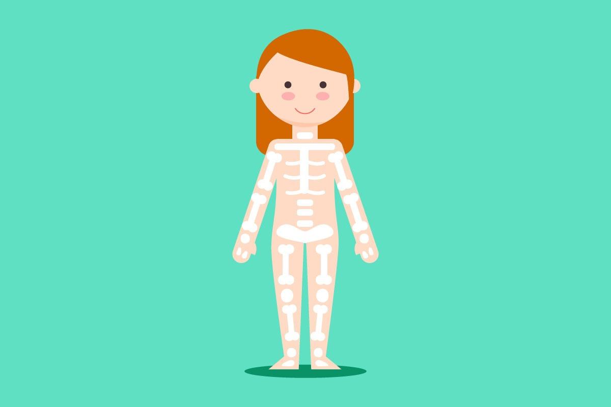 Koľko kostí má dospelý človek?