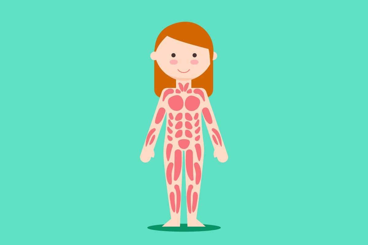 Aký je najsilnejší sval ľudského tela?