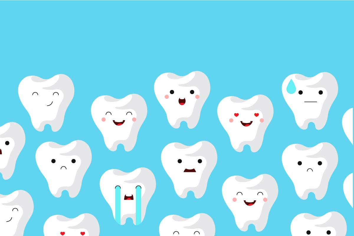 Koľko zubov má stály chrup?